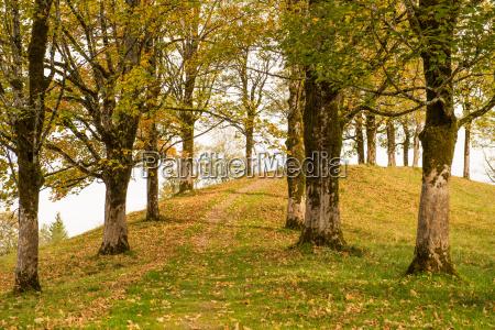 albero alberi tronco algovia corteccia licheni