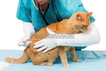 behandlung mit sthethoscope an der veterinaer