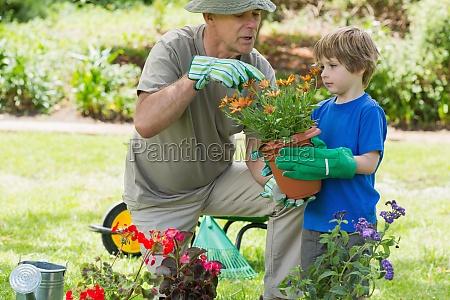 grossvater und enkel beschaeftigt im gartenbau