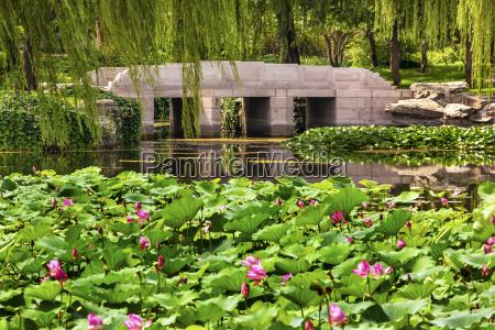 lotus garten reflexions bruecken weide sommer