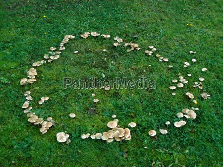 hexenring feenring aus pilzen