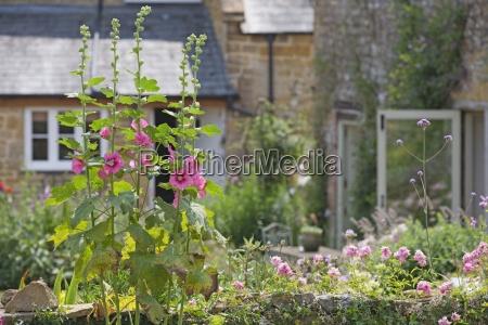 piekny mily ogrod ogrodek kwiat kwiatek