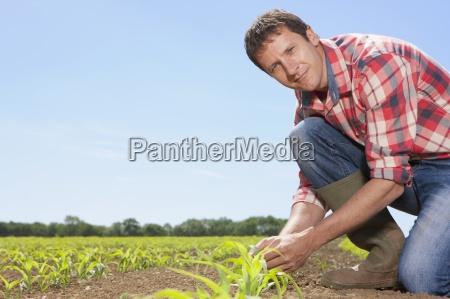 portrait landwirt dazu neigt maissaemlinge in