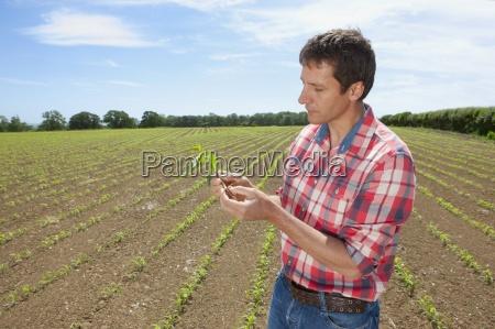 farmer pruefung maiskeimling in feld
