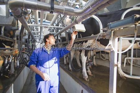 farmer milking cows in parlour