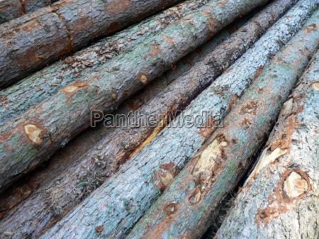geschlagenes fichtenholz