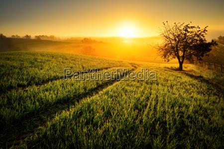 laendliche idylle im goldenen licht