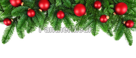 isolated pine branches with red balls