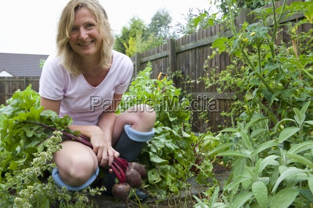 woman harvesting fresh beetroot from garden