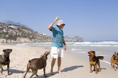 man spielt mit hunden am strand