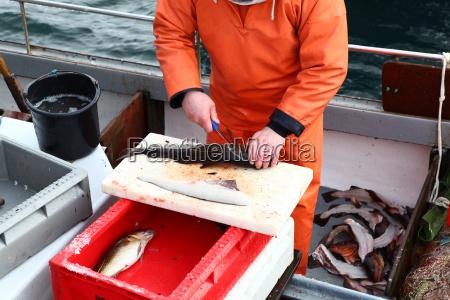 fischer beim ausnehmen seines fanges