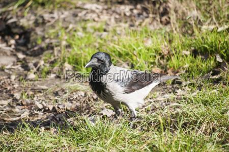 vogel boden erdboden erde erdreich untergrund