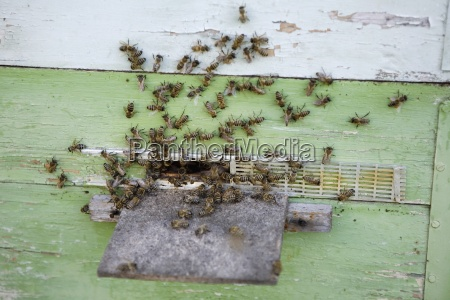 farbe insekt eingang horizontal outdoor freiluft
