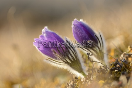 primer plano detalle flor planta caucasico