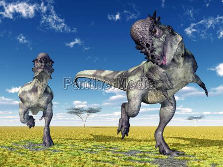 dinosaurier pachycephalosaurus