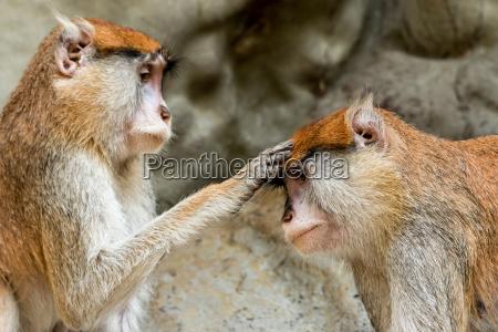 blessing monkey