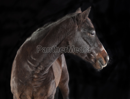 braunes pferd zur seite