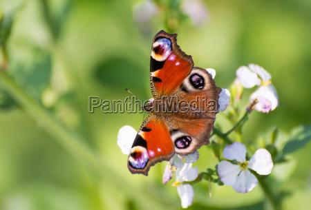 primo piano close up animale insetto