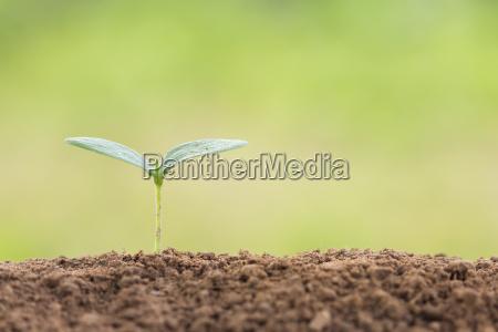 saatgut junge pflanze auf den boden