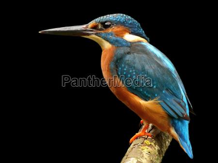 tier tiere vogel voegel natur flora