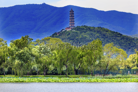 yue feng pagode lotus garden willow