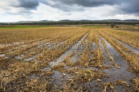 hochwasser im maisfeld nach ernte