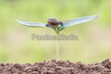 nahaufnahme schnecke auf saatgut junge pflanze