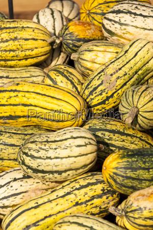 delicata sweet potato cucurbita pumpkin kuerbis