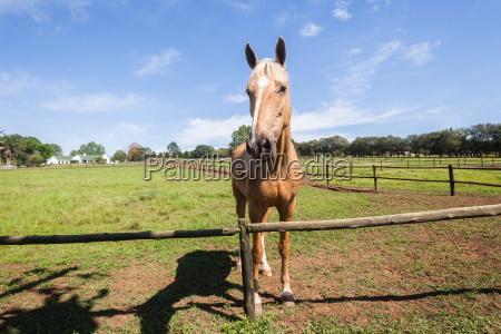 pferdeportraet tier