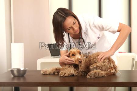 tieraerztin untersucht einen hund
