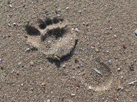 fussspur im sand
