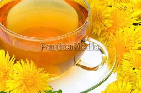 tee loewenzahn tea dandelion 07