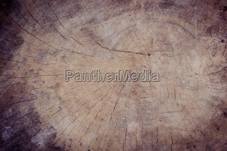 close up wood stump