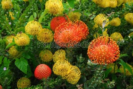 garten botanischer garten kristenbosch afrika suedafrika