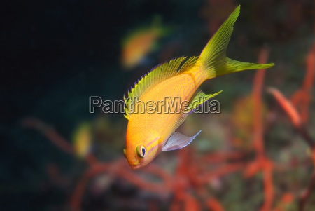philippinen sulusee tauchen insel pandan apo