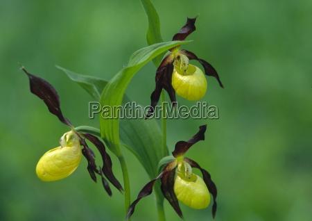 natur sommer flora wald pflanze blume