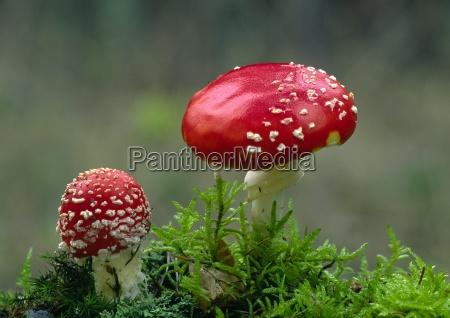 natur herbst wald waldboden pilz pilze