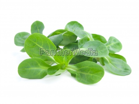 fresh salad isolated on the white