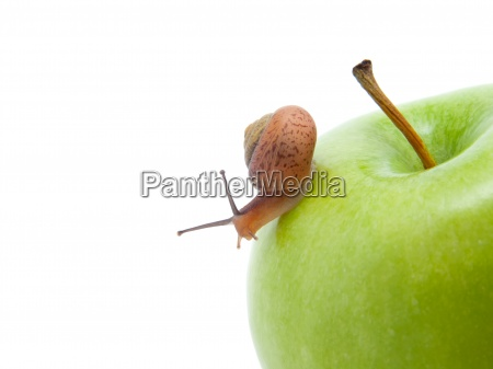 green apples withe snail isolated on