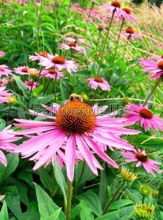 giardino fiore pianta fioritura fiorire selvaggio