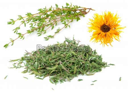 dried and fresh thyme isolated on