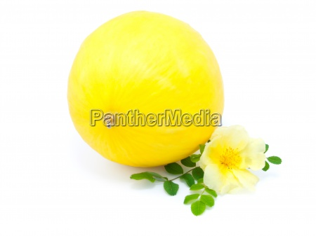 yellow melon with flower isolated on