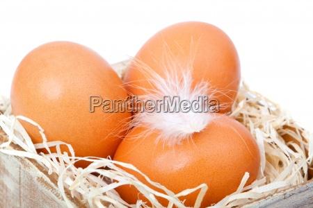 huevos de color marron en el