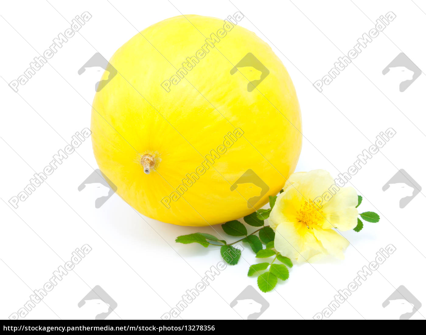 Yellow Melon With Flower Isolated On White Background Lizenzfreies