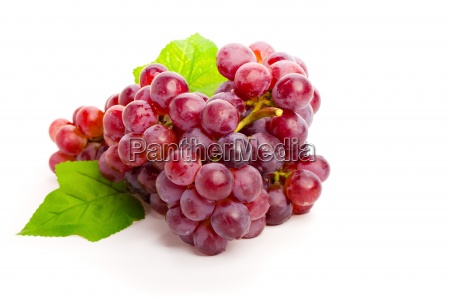 green grapes fruit page sheet bunches