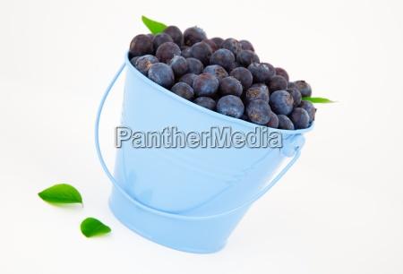 fresh blueberry in a blue mug