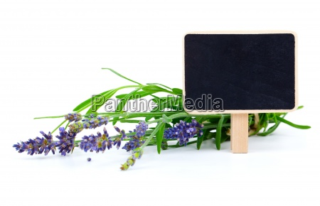 a bunch of lavender flowers with