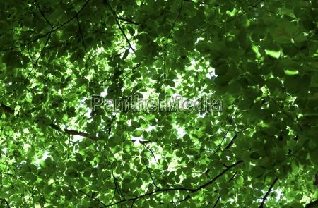 gruene blaettern der baeume