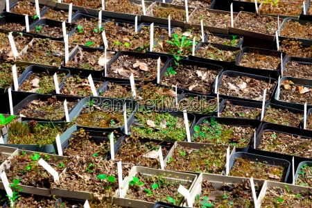 saemlinge von verschiedenen pflanzen im botanischen