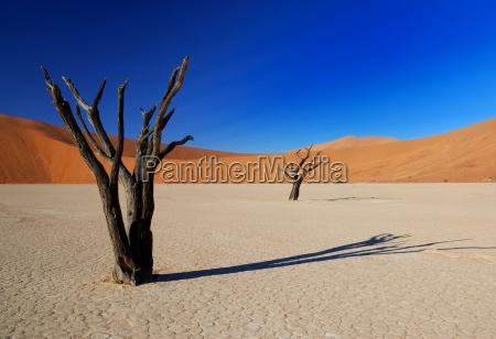 dead trees in deadvlei